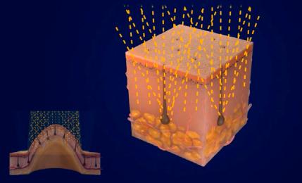 le-domes-duet-003